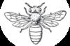 Queen Bee Leadership Training